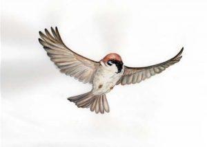 飛び立つ雀