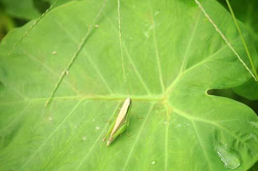 二十四節気「寒露(かんろ)」葉と虫