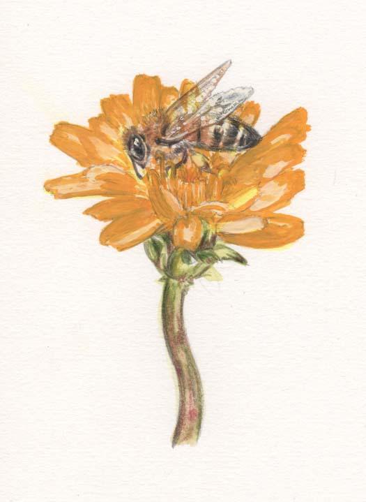 「二十四節気(春分)」たんぽぽとミツバチ