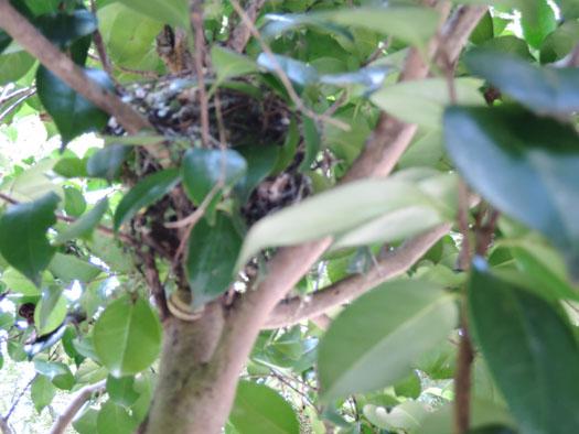 二十四節気「白露(はくろ)」カタツムリと丸型の巣