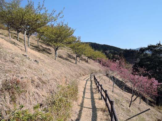 二十四節気「清明(せいめい)」山桜